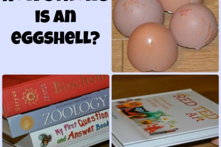 How strong is an eggshell?