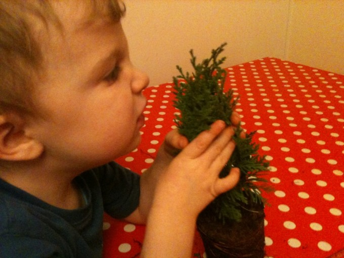 Investigating Christmas Trees Science Sparks