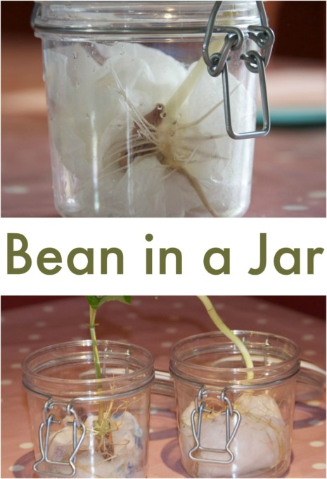 Bean in a jar
