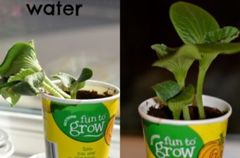 Why do plants need water