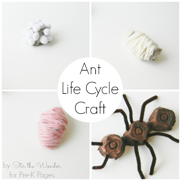 Ant-Life-Cycle-Craft