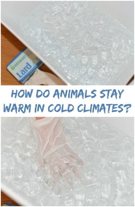 How do animals stay warm