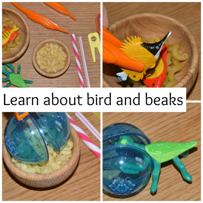 birds and beaks