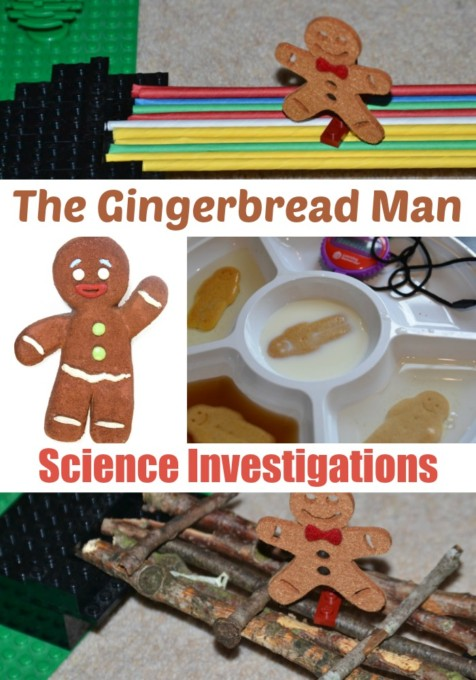 Gingerbread Man Science Investigations