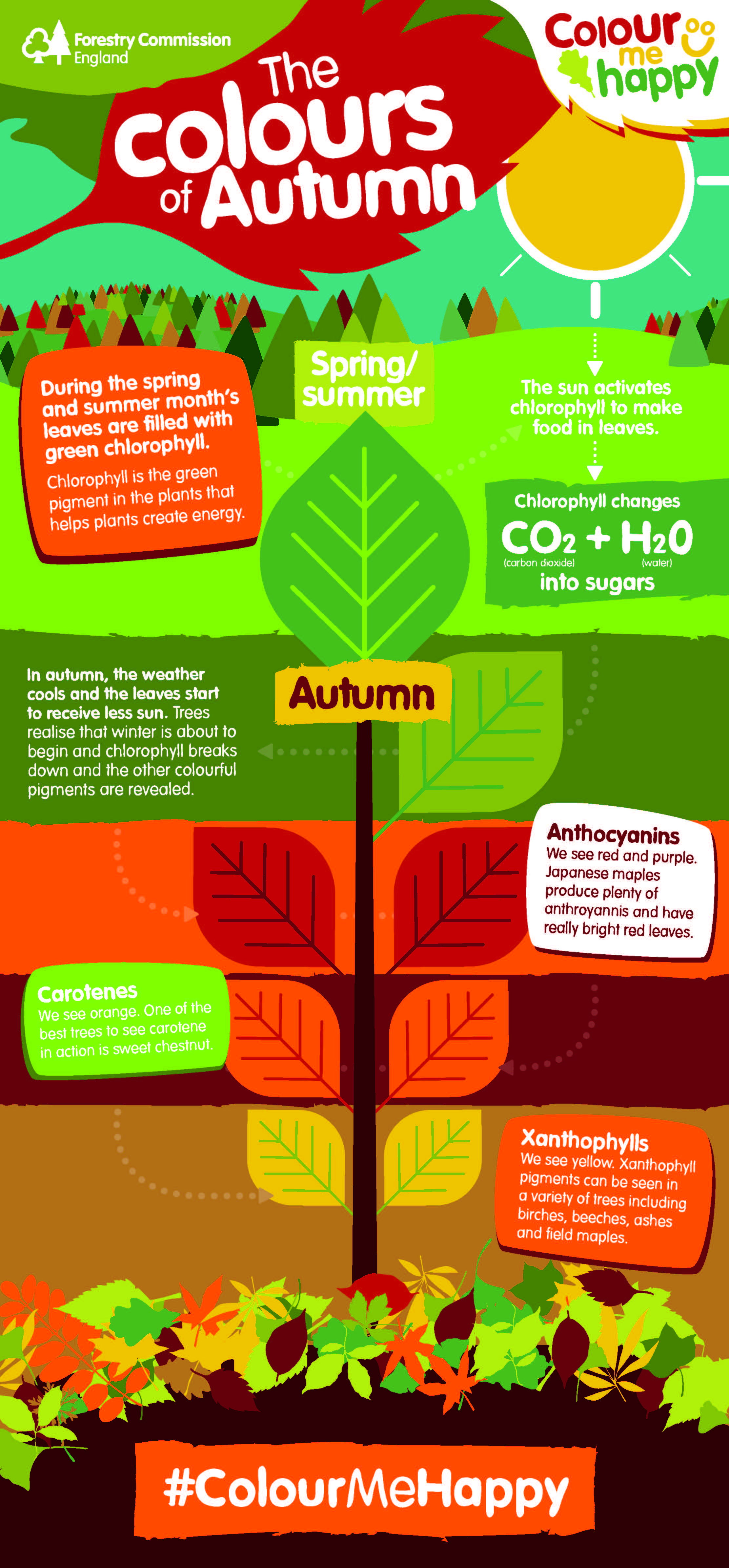 Changing colours of autumn - Science Sparks