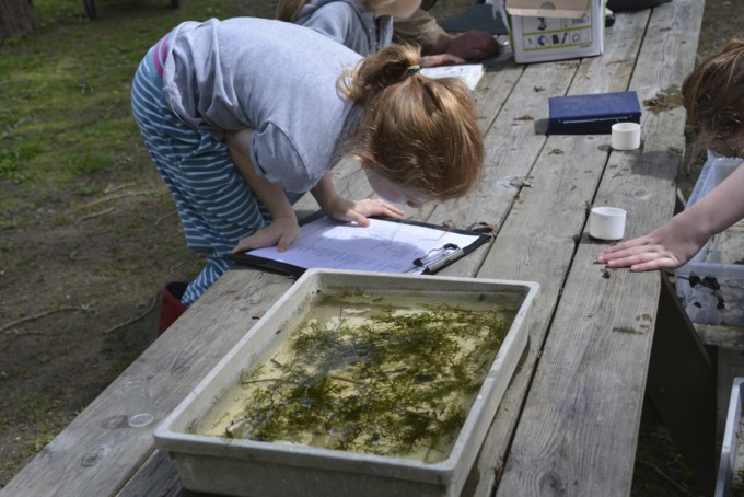 Pond dipping at deerpark