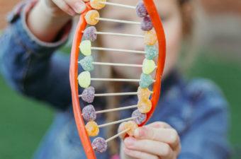 DNA Models - science for kids - candy DNA model