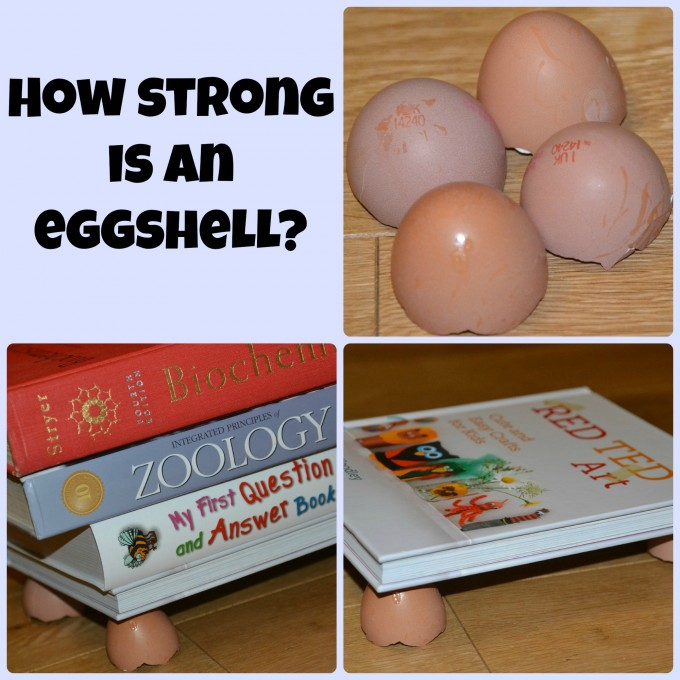 how strong is an eggshell