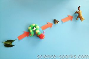 Simple Food Chains and a worksheet, Science Sparks