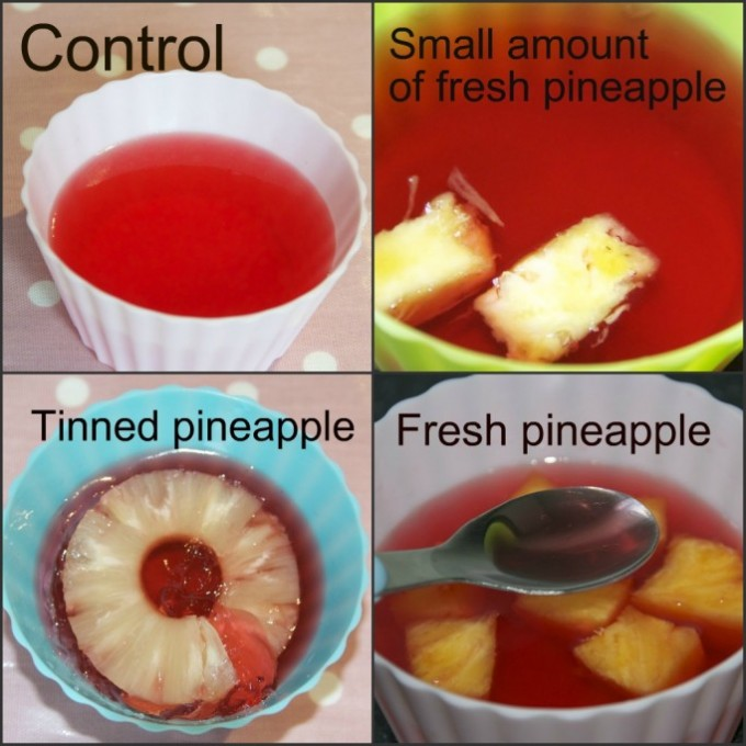 results of an investigation into why jelly doesn't set with pineapple