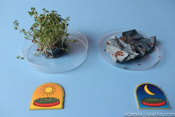 Little Labs Plant Science Kit Review, Science Sparks