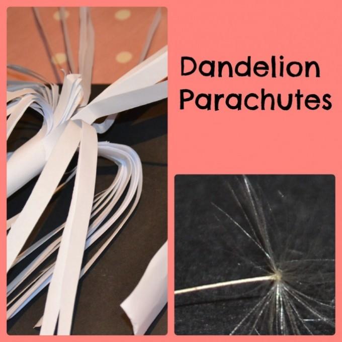 dandelion parachutes