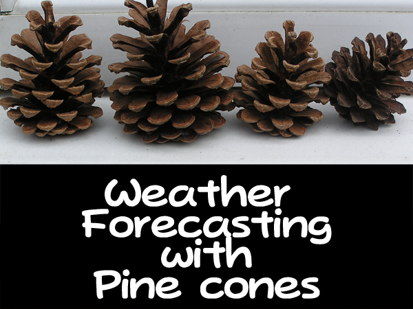 pinecone weather station - predict the weather with pinecones!! #scienceforkids