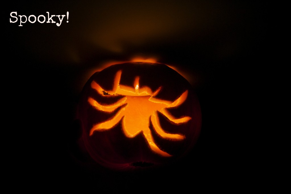 Halloween pumpkin with a spider carved into it