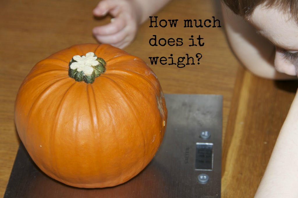 weigh pumpkins