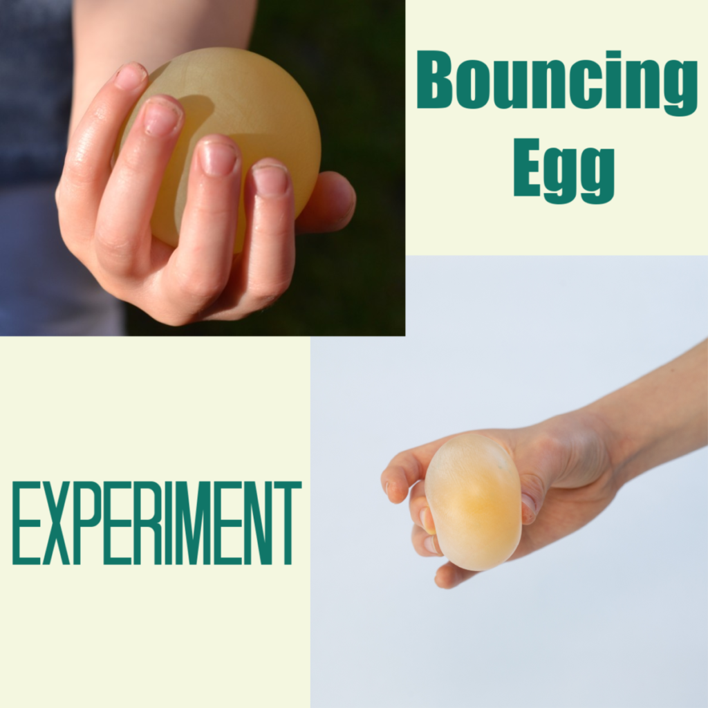 Bouncing Egg Experiment - remove the shell from an egg with vinegar and watch it bounce! #scienceforkids