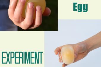 Bouncing egg Experiment