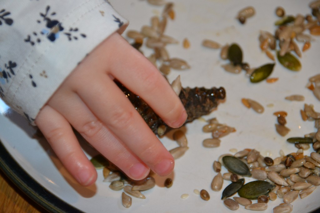 Pine cone bird feeder - autumn science for kids