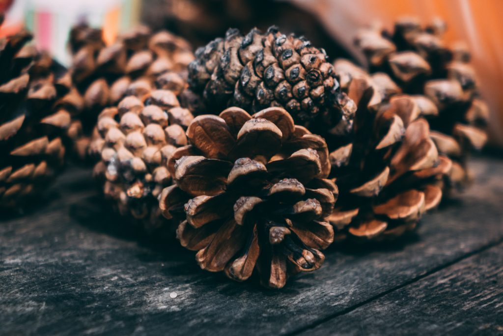 Pinecones for a homemade bird feeder