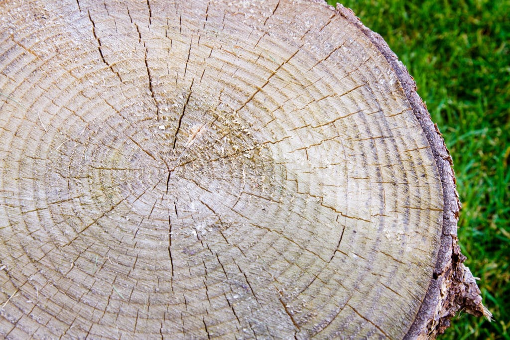 A tree with tree rings