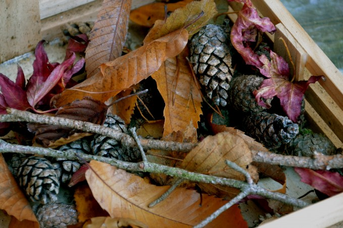 autumn treasures - leaves, sticks and pinecones in a wooden box
