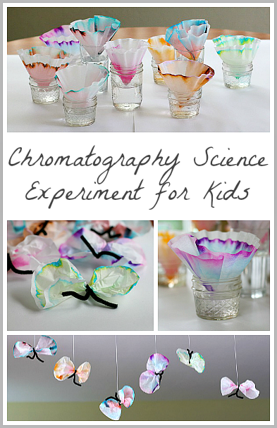 Chromatography experiment using flowers