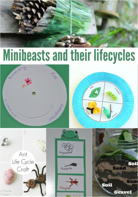 minibeast-and-their-lifecycles