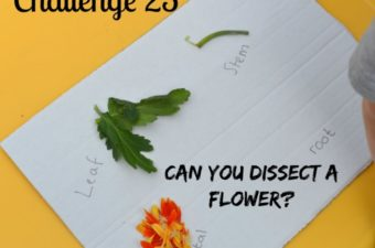 Dissecting Flowers and more plant experiments