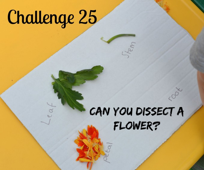 Dissect a flower - fun plant science activity for kids. Image shows a plant broken up into parts and labelled.