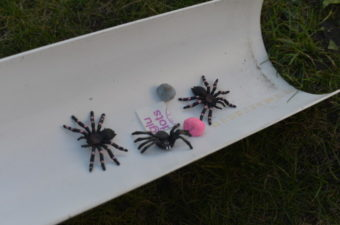 Incy Wincy Spider Science Experiments