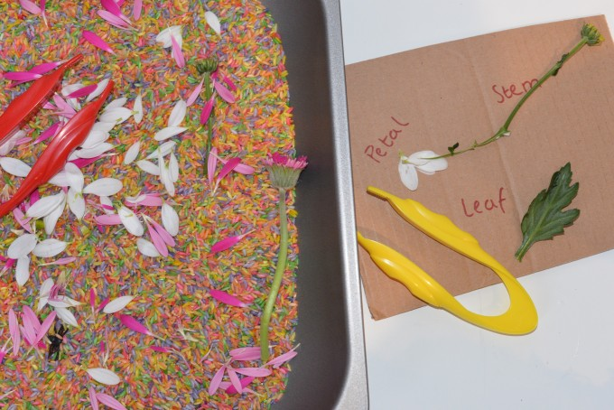 Flower rice sensory tray. Contains coloured rice and flower parts #plantscienceforkids #scienceforkids