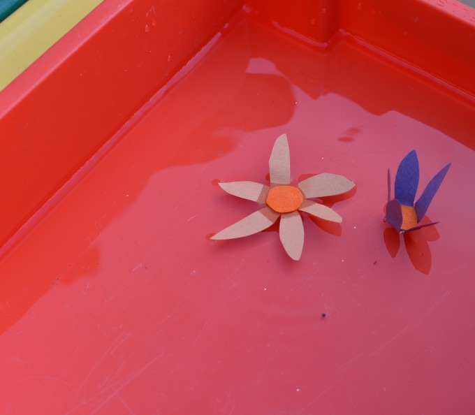 capillary action experiment - sugar paper flowers open up in water