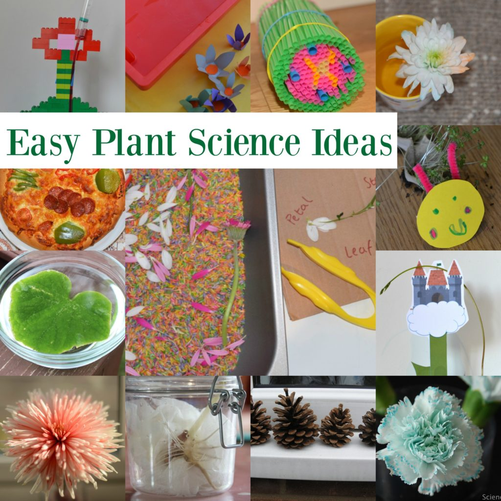 Easy plant science ideas for key stage 1 and key stage 2.Dissect a flower, make a coloured flower and lots more easy plant science experiments #plantscienceforkids