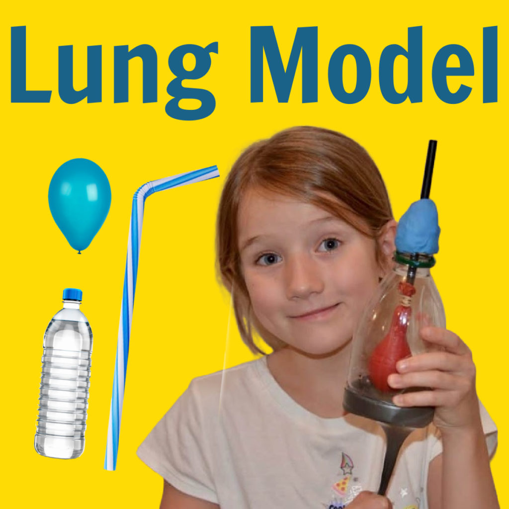 Model lung made with a plastic bottle and balloons