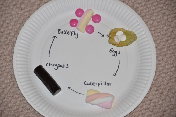 edible life cycle - butterfly lifecycle made on a paper plate using candy - easy lifecycles for kids