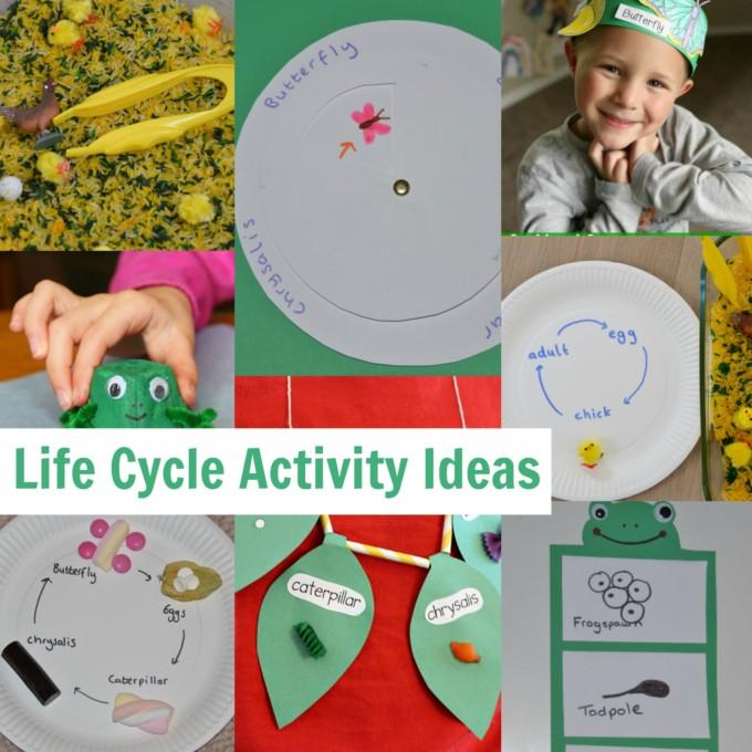 life cycle activity ideas
