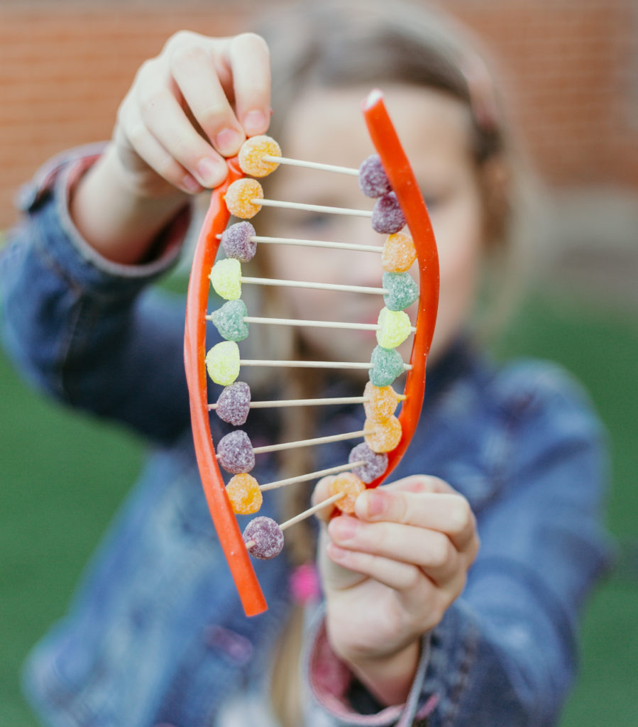 Candy DNA Model - create a model of DNA using candy! #scienceforkids #biologyforkids #ediblescience