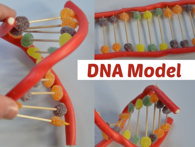 Candy DNA model