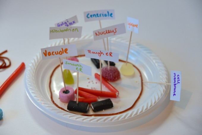 Candy model of a cell