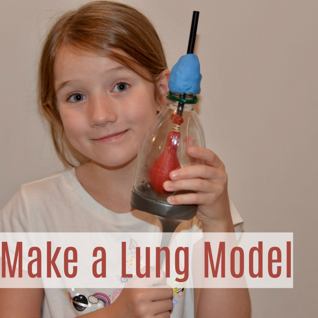 Make a lung model - fun human biology experiment for kids. Discover how the lungs work with this easy model. #scienceforkids #lungmodelforkids