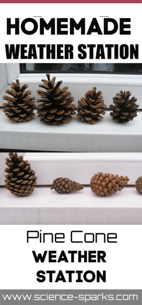 Homemade pine cone weather station - easy science for kids. Use Pine cones to predict whether it will rain or not #weatherscience #scienceforkids #scienceexperimentsforkids