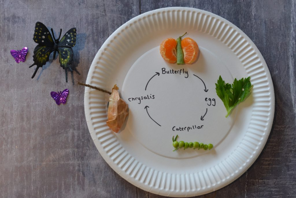 Butterfly Life cycle illustrated on a plate with peas, oranges and leaves.
