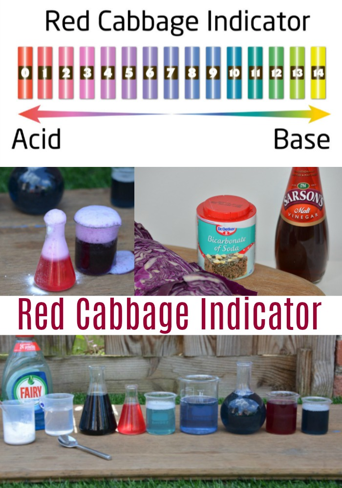 Red Cabbage pH Indicator. Use red cabbage to make a pH indicator. fun chemistry experiment for kids #chemistry #chemistryexperimentsforkids