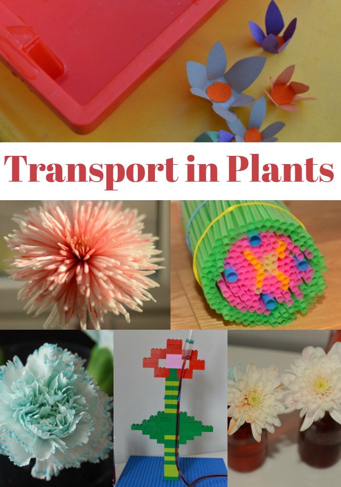 Experiments to demonstrate transport in plants