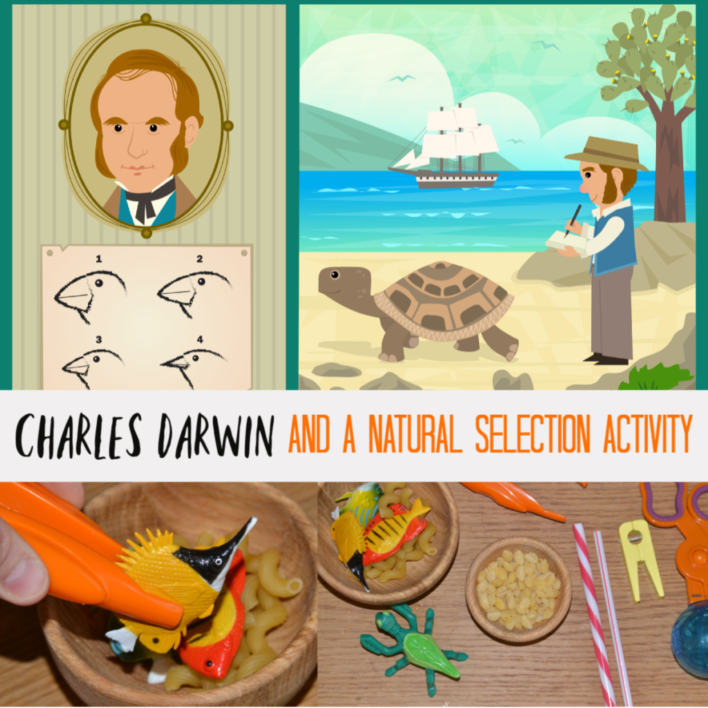 Charles Darwin for kids and a Natural Selection Activity #Famousscientists #scienceforkids