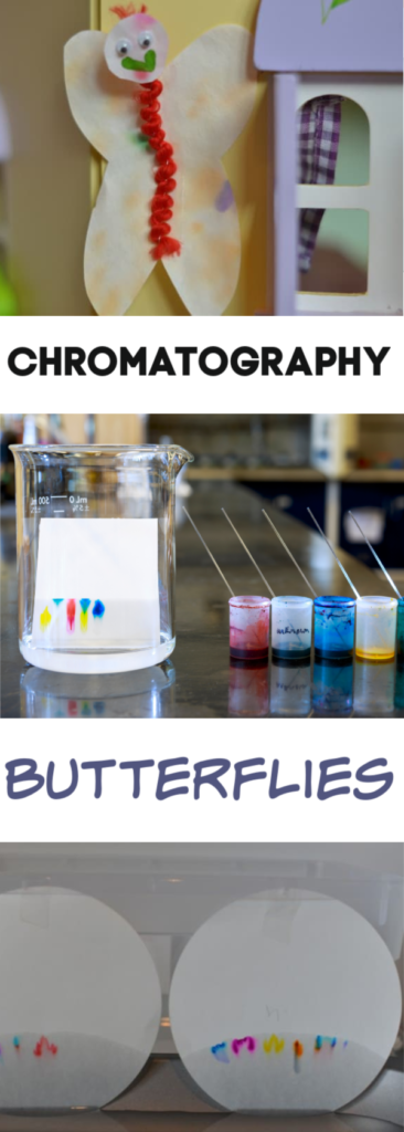 Chromatography Butterflies and other chromatography experiments. Try this fun science craft and then candy chromatography, leaf chromatography and more chromatography experiments #chromatography #scienceforkids #scienceexperimentsforkids