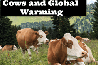 Climate Change for Kids - Cows and Global Warming