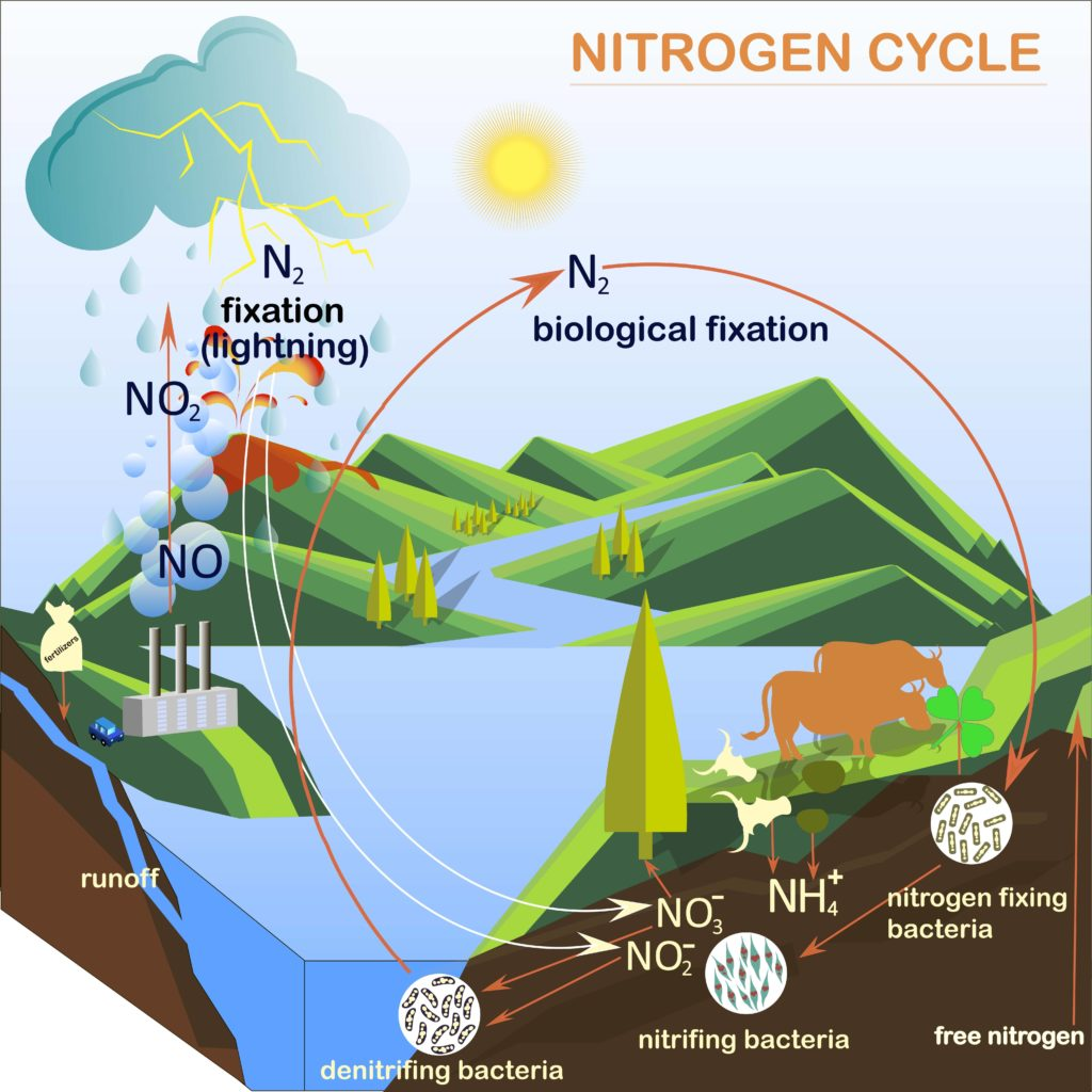 Nitrogen cycle Image