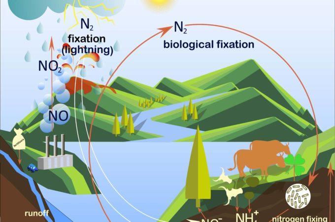 Nitrogen cycle Image