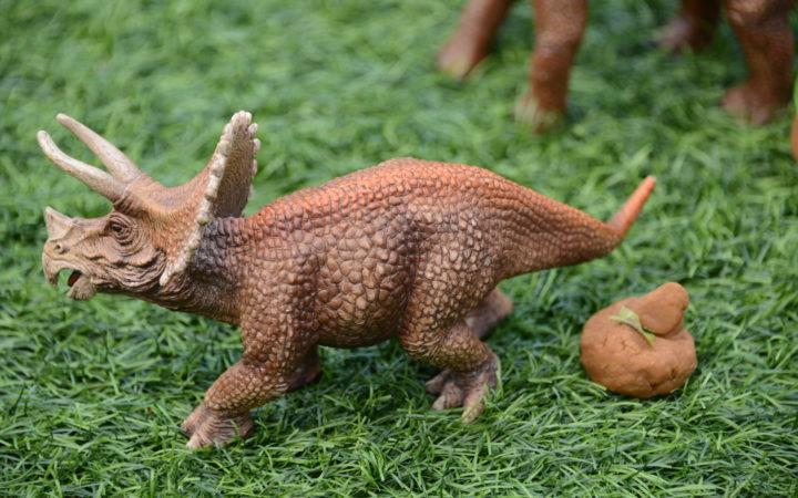 Herbivore dinosaur poop